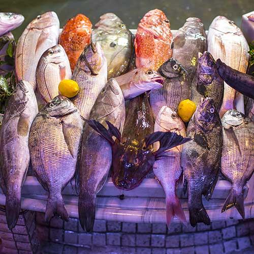 Balıkların Sınıflandırılması
